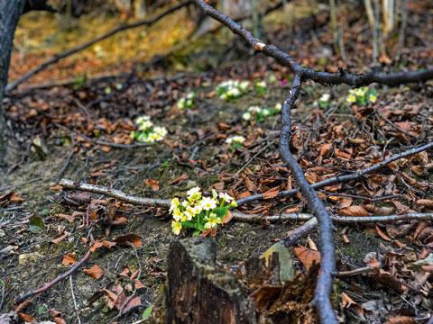 flowers2_khutirtykhyi