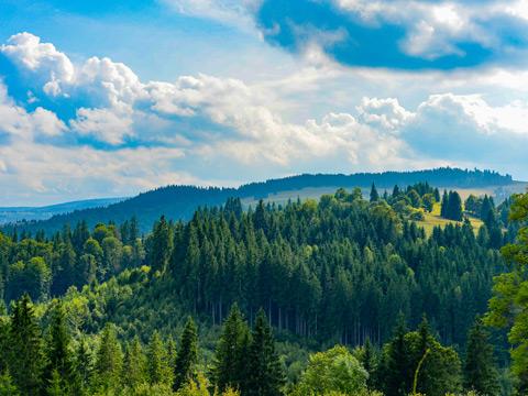 forest_hutir